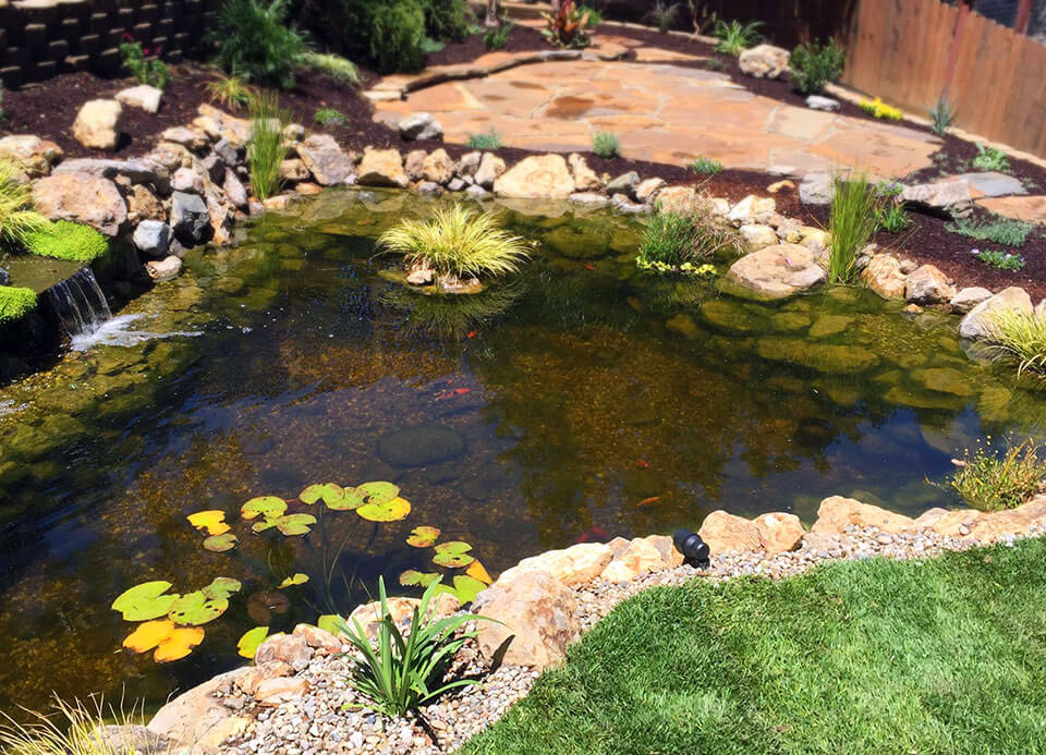 Custom pond construction in Canoga Park, CA with live lily pads