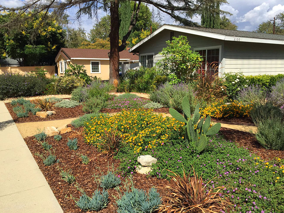 Landscaper in Canoga Park, CA installed a drought tolerant front yard landscape with wood chips