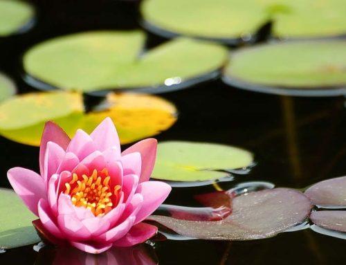 5 Pond Plants Koi Won't Eat