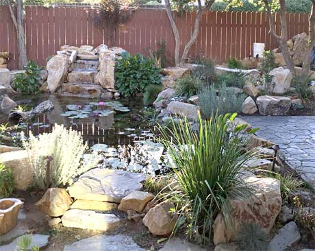 Custom pond with waterfall and aquatic plants