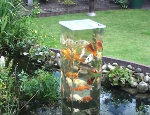20 Unique Koi Ponds You Have to See to Believe