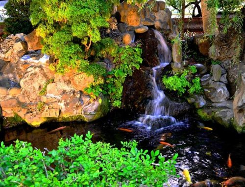 5 Questions to Ask Before Hiring a Pond Builder