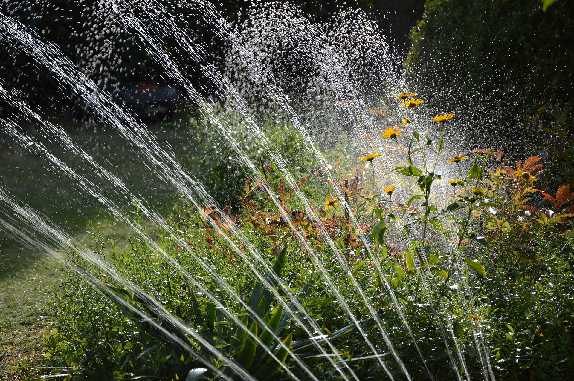 Watering a garden after a successful sprinkler repair in Thousand Oaks, California