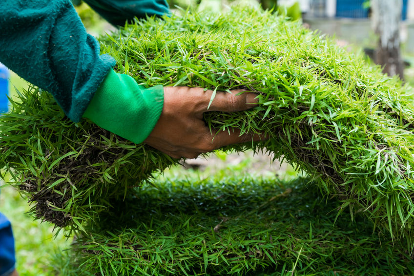 landscaper prepares turf grass for new installation in northern Los Angeles