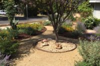 drought tolerant landscape design with rock garden and tree