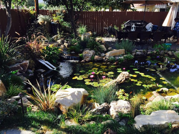 custom backyard pond with koi fish and lily pads that was built in Los Angeles, california in 2017 by our team of landscape designers