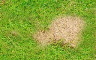 how to get rid of brown spots on your lawn