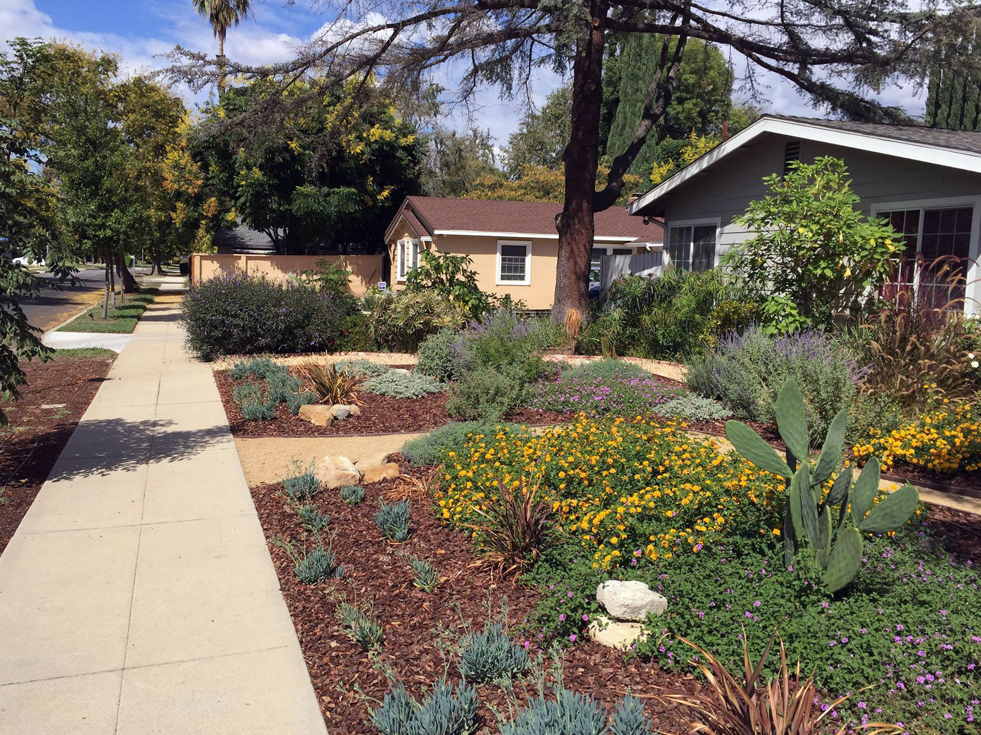 landscaper in Encino inspecting the yard