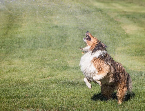 How Do I Dog-Proof My Sprinklers?